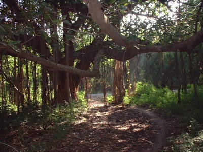 大学の中の森