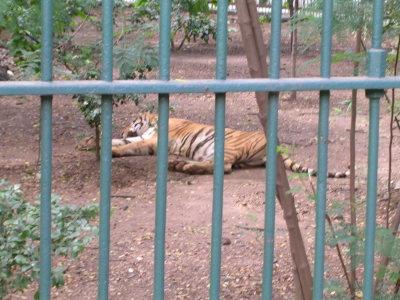ヴィクトリア動物園
